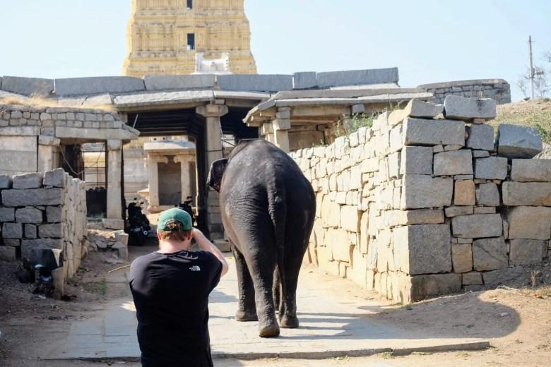 Lakshmi elephant in Virupaksha Temple in Hampi, India