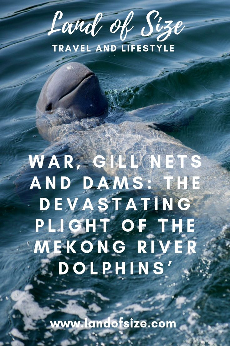 War, Gill Nets and Dams: The Devastating Plight of the Mekong River Dolphins