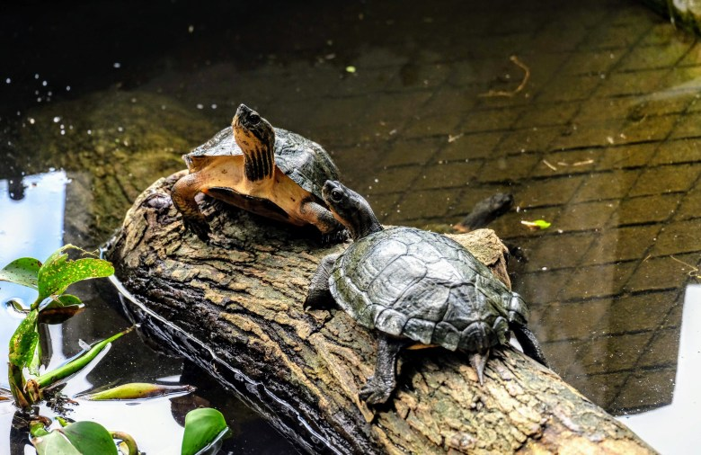 Turtle Conservation Centre, Cuc Phuong National Park, Vietnam