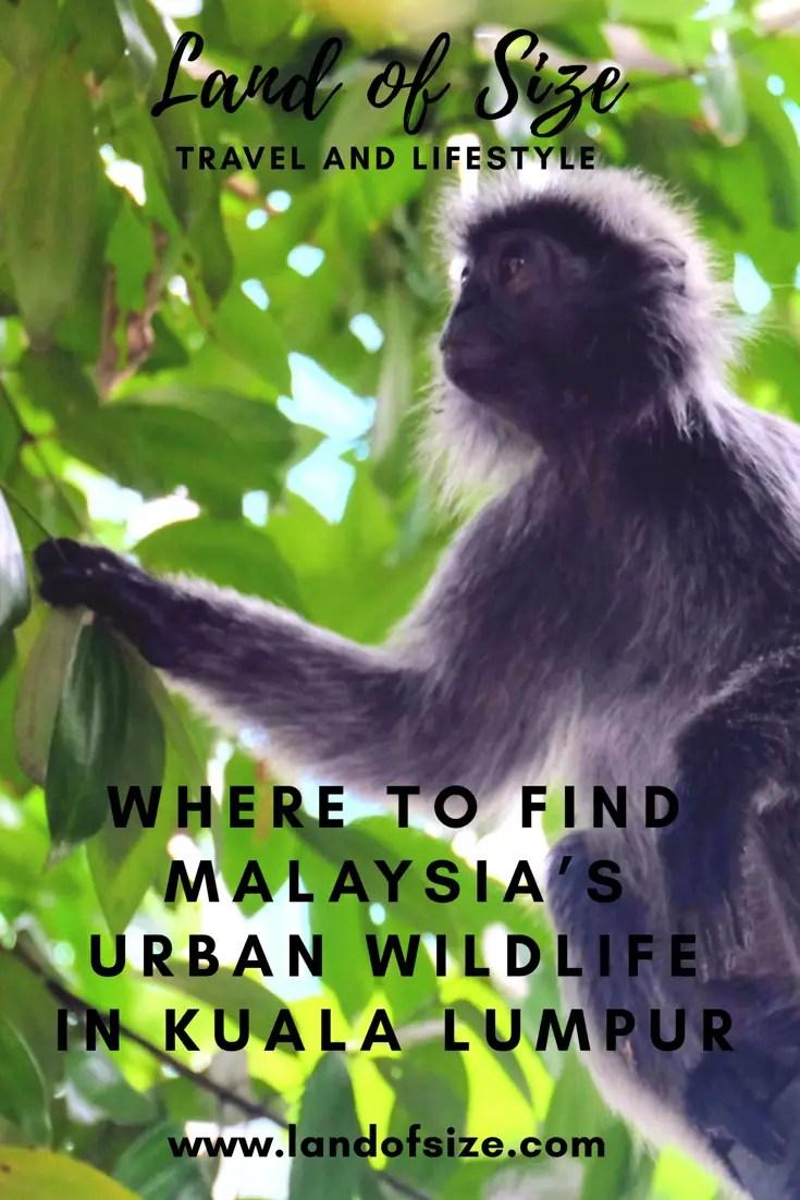 Where to find Malaysia's urban wildlife in Kuala Lumpur