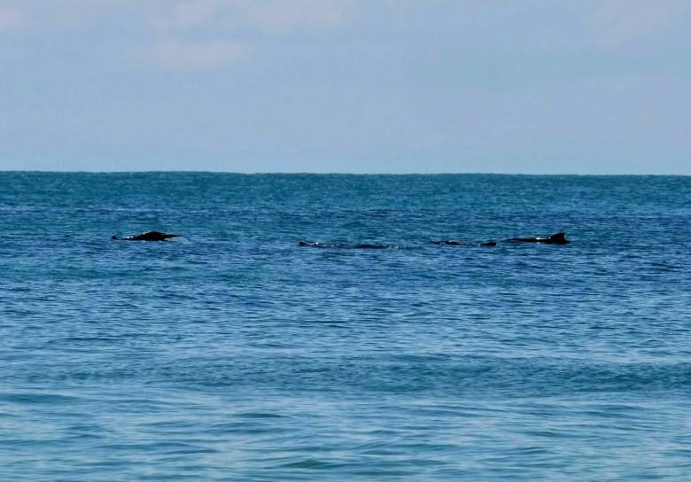 Dolphins at Skull Beach, Langkawi Island, Malaysia