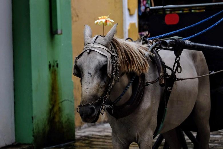Horse in Vigan, Philippines