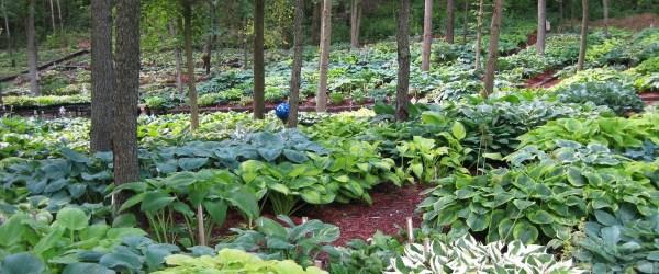land of giants hosta farm