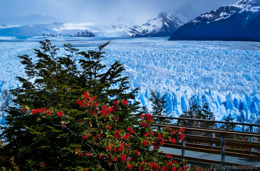 An image portraying the boardwalk by the infinite ice of the Perito Moreno Glacier