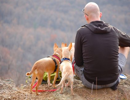 An image of a man and his dogs admiring the view during a hiking trip