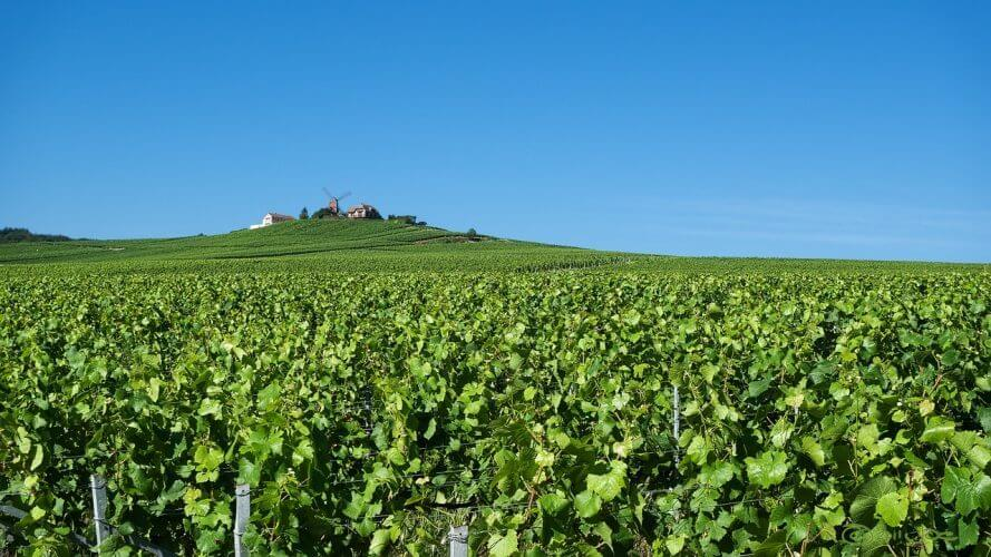 A picture of a vineyard in Reims France