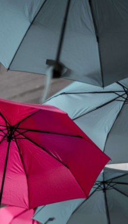 Some of the best travel umbrellas are shown here