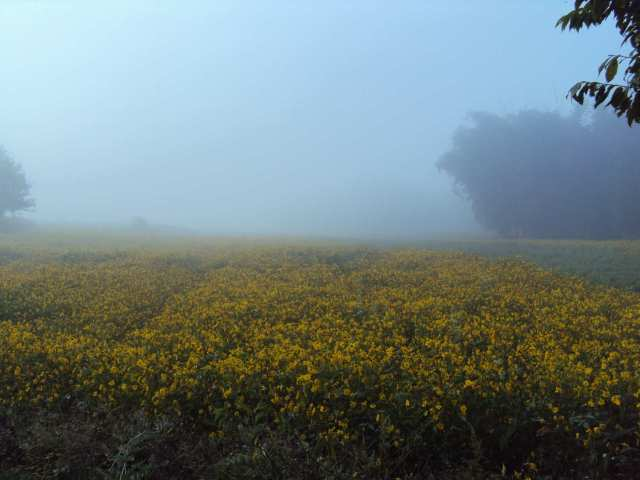 Fields in fog