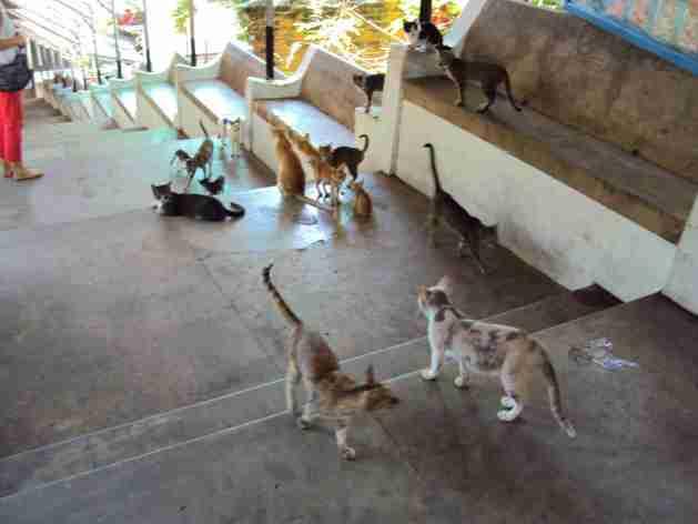 Katzen Grossfamilie