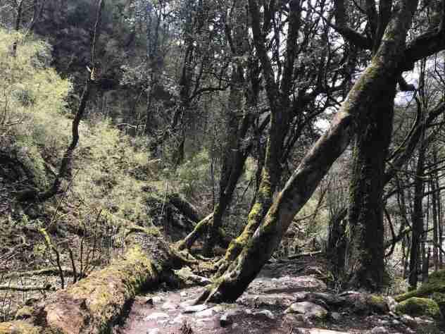 Mittelerde-Wald