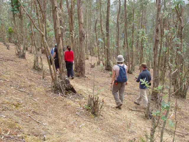 Durch schattige Wälder