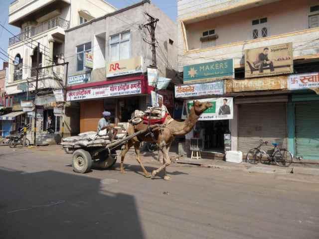 Strassenszene in Bikaner