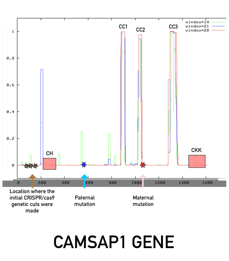 CAMSAP1 Published Research