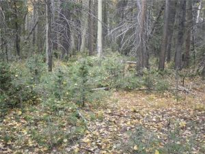 Forbes Park Land for Sale