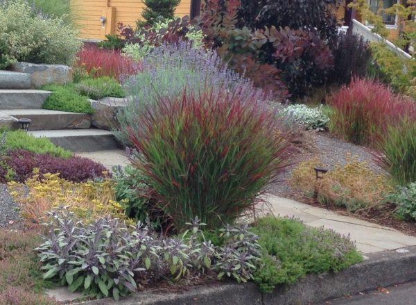 maintenance grasses