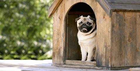 dog friendly landscape ideas