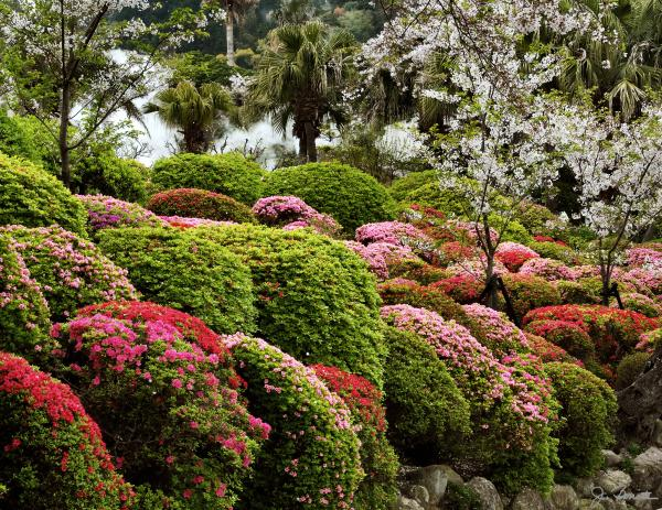 choosing landscaping plants
