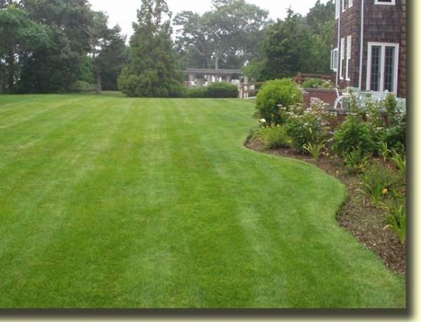 landscaping 101 lawn maintenance
