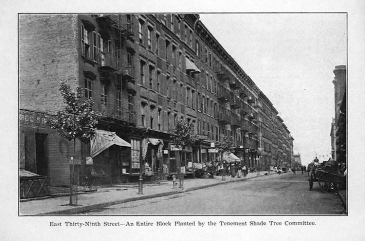 BEDIT_Back-UrbanTrees_10_SD_LAM_Tree Planting Association_1903-4_Page_23 copy
