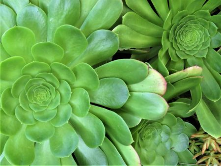 Landscape Assistance Succulant Water Wise San Diego