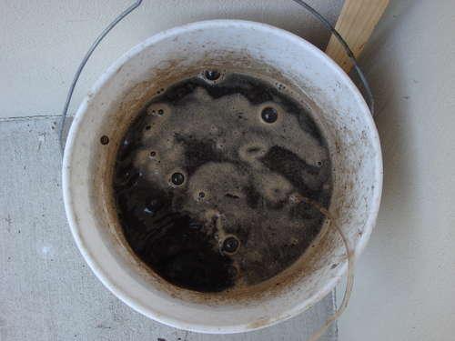 Using Compost Tea