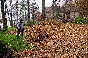 spring and fall yard leaf cleanups
