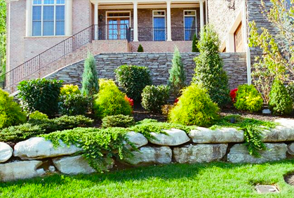 types of evergreens landscaping