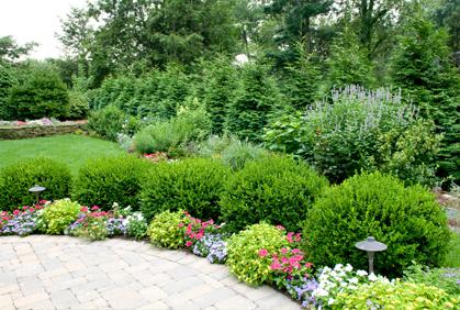 shrubs landscaping