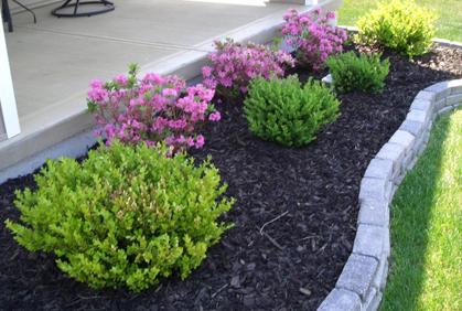 types of shrubs landscaping