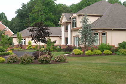 Shrubs And Bushes For Landscaping Pictures And Ideas