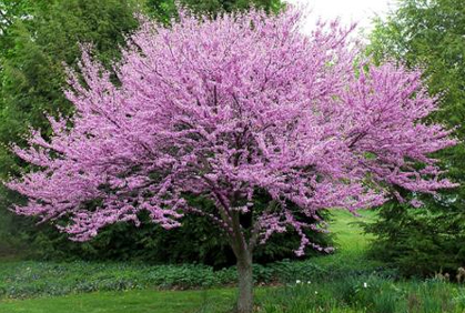 types of trees landscaping