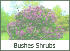 25 Most Popular Landscaping Bushes And Trees Pictures And Ideas On