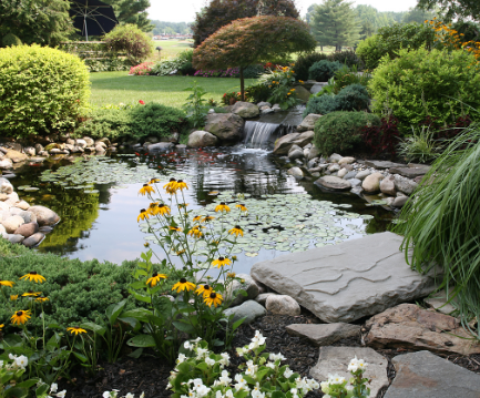 pond water feature with water fall shrubs and yellow black eyed black eyed susan rudbeckia flowers