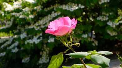 Hotel Biron garden