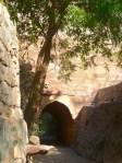 Rao Jodha Desert Park, Jodhpur