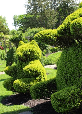 a whimsical blend of formal and informal spaces green animals is the creation of joseph carreiro and his son in law george mendonca who for a combined - Green Animals Topiary Garden