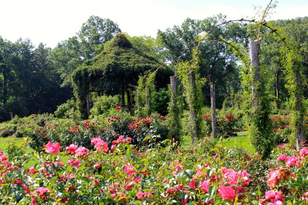 Consider the rose elizabeth park landscape noteslandscape notes this is a bit of an obsession with me trying to understand how innovations and firsts in garden and landscape design impact historical trends workwithnaturefo