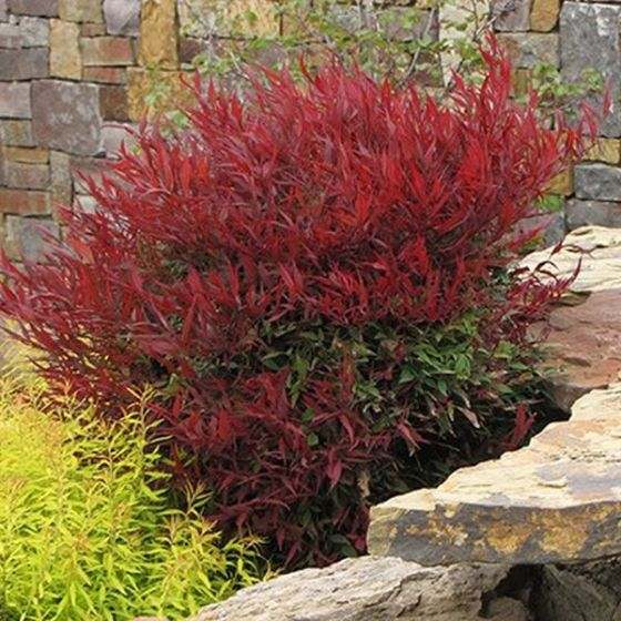 Plants Trees & Shrubs, Plants Trees & Shrubs, Landscape Pros | Landscape Design & Landscaping Services Manassas, VA