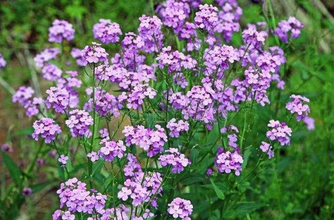 Virginia Wildflowers, Virginia Wildflowers, Landscape Pros | Landscape Design & Landscaping Services Manassas, VA
