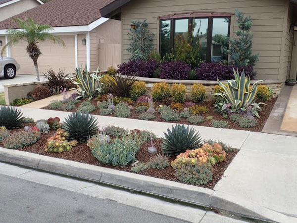 drought tolerant landscaping orange