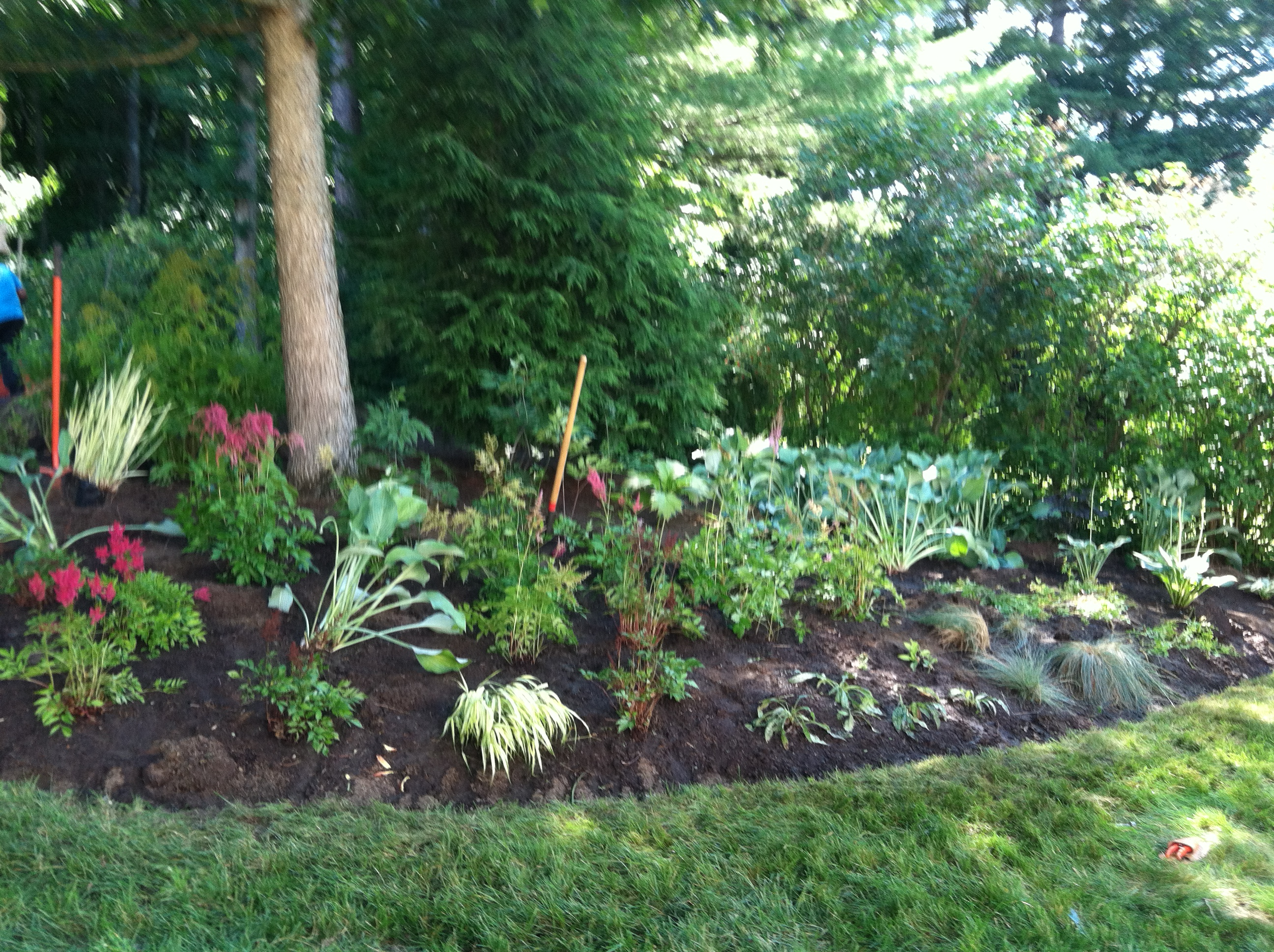 Perennials dug out and divided, beds weeded and tilled, plants re-installed with new spacing and design