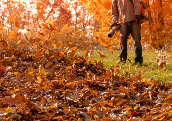 five simple reasons fall clean