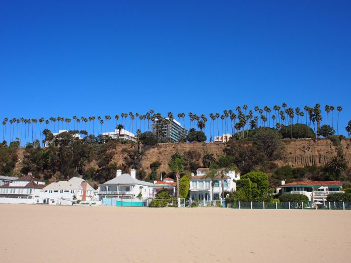 Palm trees above Santa Monica.