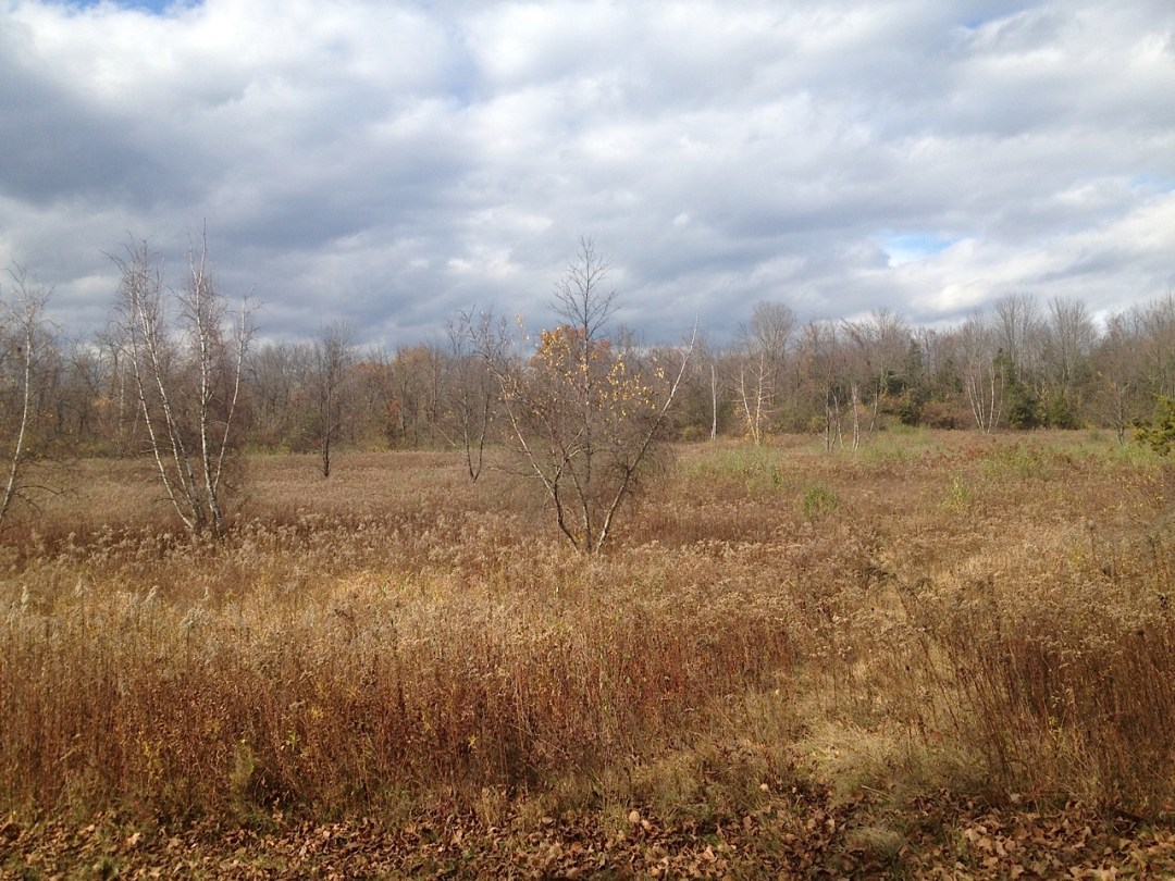 Native plant Garden: Late Fall Meadow With Gray Birch
