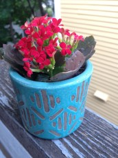 kalanchoe flowering succulent in an urban outfitters pot