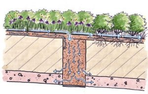 Butterfly Acres CARA Restoration Infiltration Trench Detail