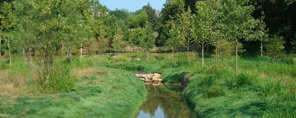 Don't Just Plant Them and Leave Them Alone: Riparian Buffer Maintenance