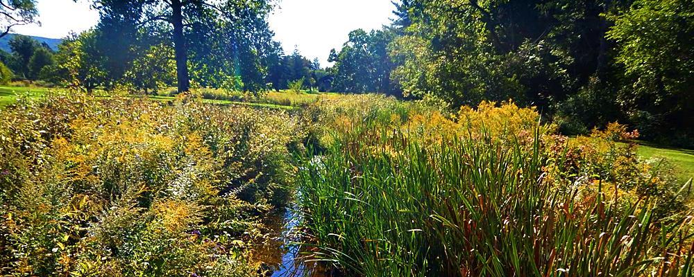 Brookside Country Club Stream & Floodplain Restoration