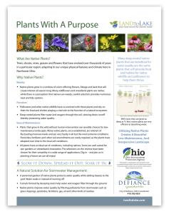 Northwest Ohio's Native Plant Guide