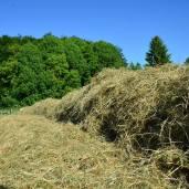 aus Gras wurde Heu
